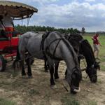 Vialto Farm