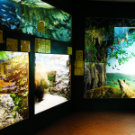 Zoological Museum of Bacioccchi Villa