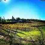Fibbiano Farm