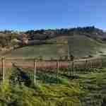 Castelvecchio Farm
