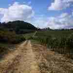 Terricciola Trekking's paths